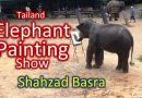 Thailand Elephant Painting Show