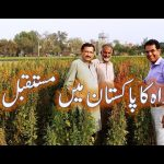 current status of Quinoa crop in Pakistan by Dr Basra