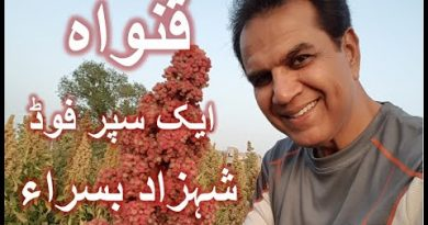 Documentary about Quinoa crop in Pakistan by Dr Basra In urdu