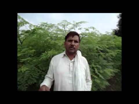 Moringa feed.wmv