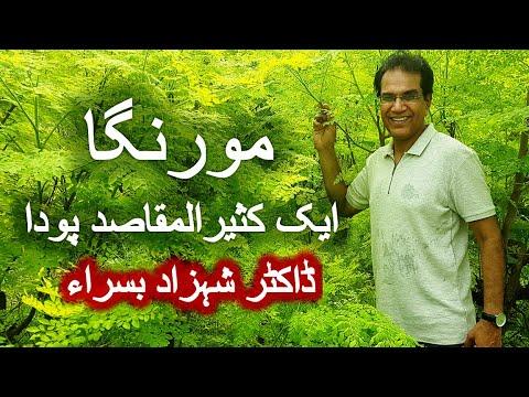 Moringa Pakistan Shahzad Basra 2