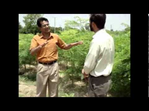 Moringa Pakistan Shahzad Basra 3