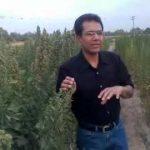 Quinoa ideal future cash crop of pakistan.3gp