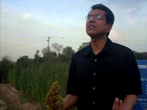 quinoa introduction shahzad basra.6.4.11.MOV
