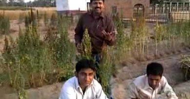 Quinoa shahzad basra pakistan 4.mp4