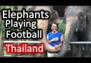 Elephants can Play Football