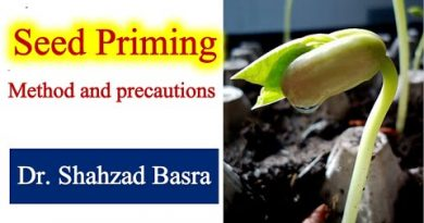 Moringa priming post care