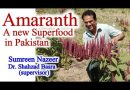 Amaranth a Highly Nutritious Food Grain