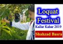 Loquat Festival by Agri Tourism Corporation at Kallar Kahar