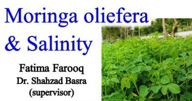 Moringa Response on Saline Conditions