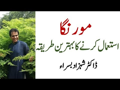 How to use moringa for maximum benefits by Dr Shahzad Basra