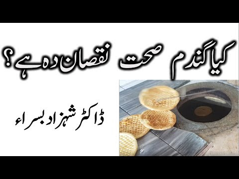 Drawbacks of eating too much wheat by Dr Shahzad Basra