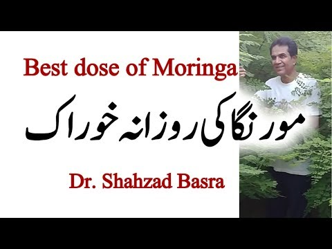 What is effective daily dose of Moringa? Shahzad Basra