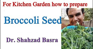 How to prepare Broccoli seed for kitchen garden by Dr. Shahzad Basra
