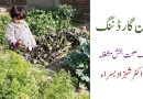 کچن گارڈننگ ایک صحت بخش مشغلہ – Benefits of kitchen Gardening