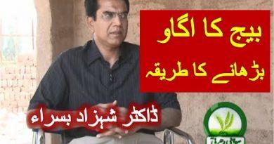 Moringa Pakistan Shahzad Basra 1.wmv