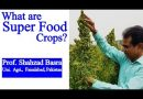 Newly introduced Super Food Crops by Dr. Shahzad Basra